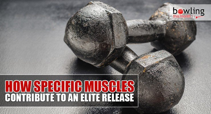 How Specific Muscles Contribute to an Elite Release